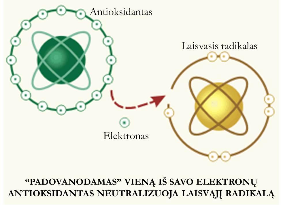 Elektronas Laisv_radikalas